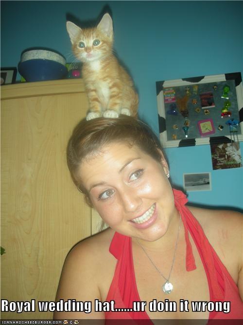 caption captioned cat doing it wrong FAIL hat head human kitten royal standing wedding - 4840253184