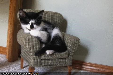 armchair,chair,cyoot kitteh of teh day,furniture,huge,sleeping,tiny
