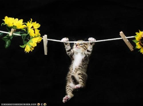clothesline,cyoot kitteh of teh day,flowers,hang in there,hanging,rope