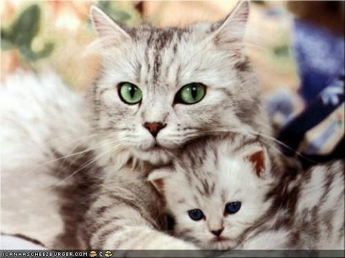 baby,cyoot kitteh of teh day,family,kitten,mom,momma,protect,proud,tiny