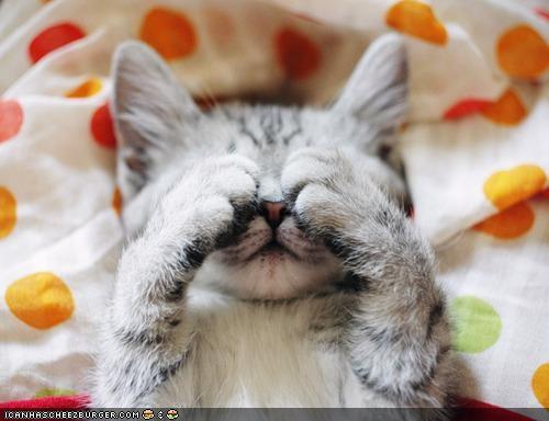 cyoot kitteh of teh day eyes games paws peekaboo peek a boo - 4840311296