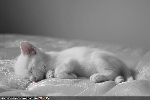 camouflage cyoot kitteh of teh day mattress sleep number sleeping white - 4840313856