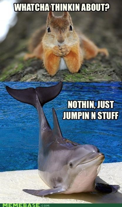 dolphin jumping mammal Memes squirrel thinking - 4840368128