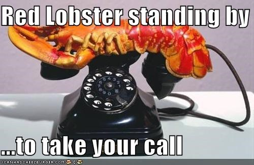 animal funny lobster technology wtf - 4840728832