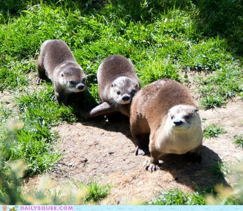 alliteration Babies baby entourage Hall of Fame otter otters pun pup pups squee spree - 4840744192