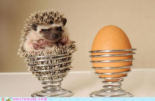 acting like animals comparison contrast disgruntled egg grumpy Hall of Fame hedgehog offended suggestion - 4840754176