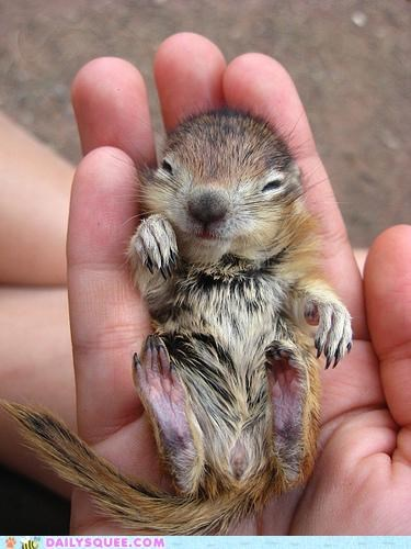 baby chipmunk Command Hall of Fame hello literalism quote say - 4840803072