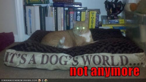 anymore,bed,caption,captioned,cat,its-a-dogs-world,not,replacement,slogan,tabby
