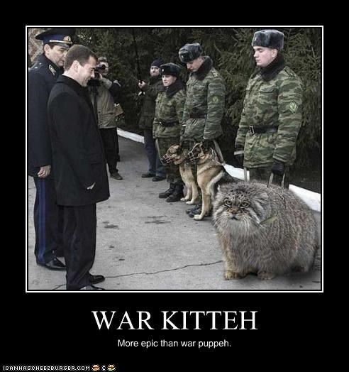 WAR KITTEH More epic than war puppeh.