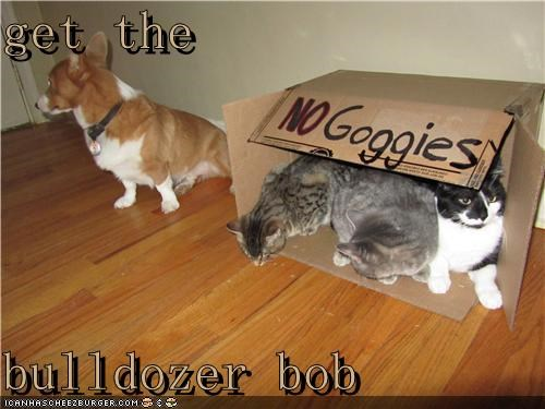 box bulldozer cat Cats Command corgi fort get no no goggies sign - 4842025728