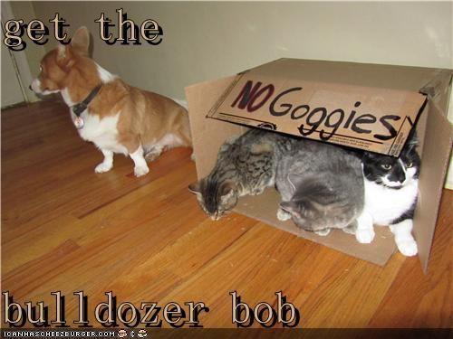 box bulldozer cat Cats Command corgi fort get no no goggies sign - 4842025728