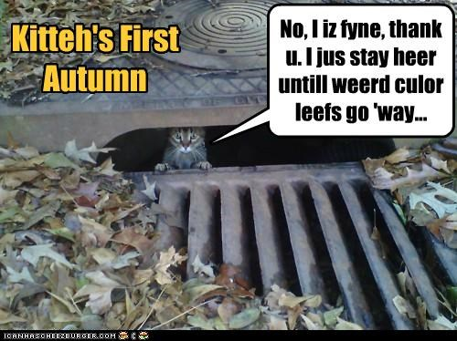 Kitteh's First Autumn No, I iz fyne, thank u. I jus stay heer untill weerd culor leefs go 'way...