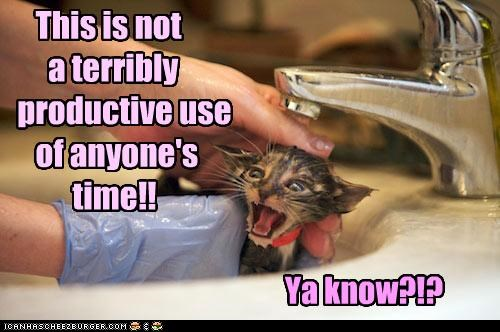 bath bathing caption captioned cat do not want kitten not productive sink time use you know