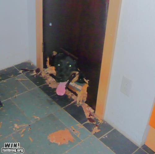 clever girl dogs door pets - 4843237120