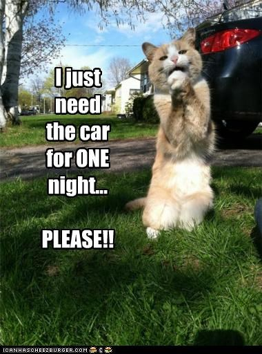 asking begging caption captioned car cat just need night one pleading please question
