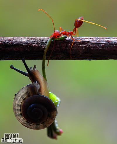 ants,helping,mother nature ftw,snails,strength