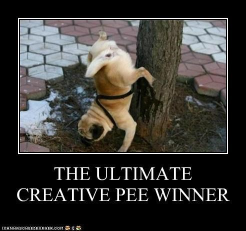 best of the week competition contest creative Hall of Fame pee pug ultimate winner
