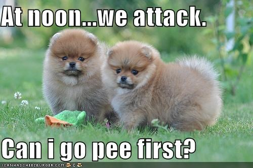 attack best of the week first go Hall of Fame noon pee permission puppies puppy question we whatbreed - 4843815168