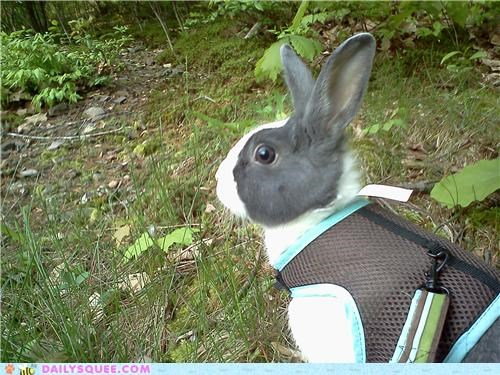 bunny exploring harness outdoors pun rabbit reader squees walking zen