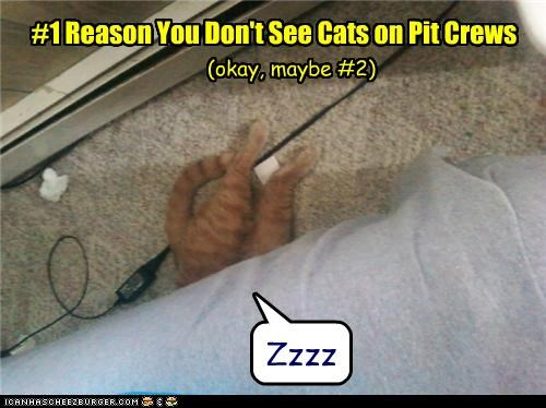 #1 Reason You Don't See Cats on Pit Crews (okay, maybe #2) Zzzz