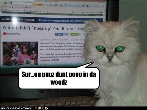 caption captioned cat disbelief headline news Sure - 4844038656