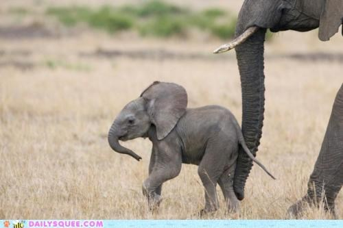 baby cub disney elephant elephants Hall of Fame Music song thought - 4844127488