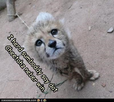 caption captioned cheater cheaters cheetah confused cub misunderstanding never pun Sad win