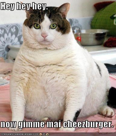 Cheezburger Image 4844359936