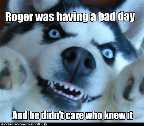 angry bad bad day best of the week care day didnt doesnt-care Hall of Fame husky it knew no1curr nows puppy upset who