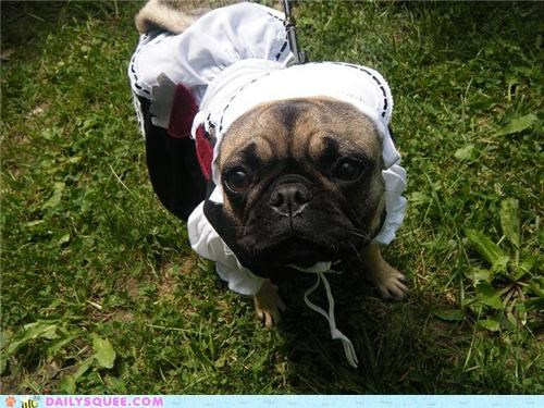 charity contest costume dogs dressed up pug reader squees