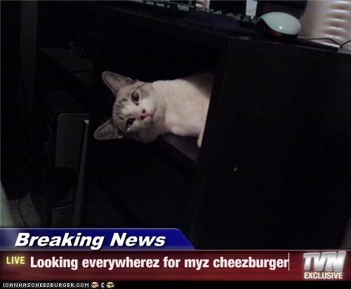Cheezburger Image 4845556992