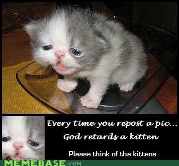 god kitten Memes pic repost slow - 4845565696