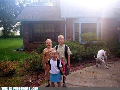Animal Bomb kids omg - 4845623552