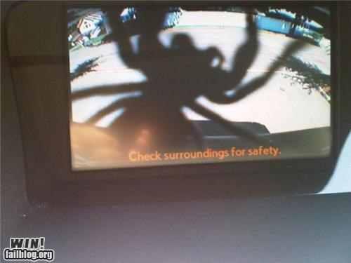 cameras insects safety spiders - 4845814016