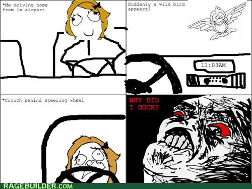 bird,look it up,Rage Comics,windshield