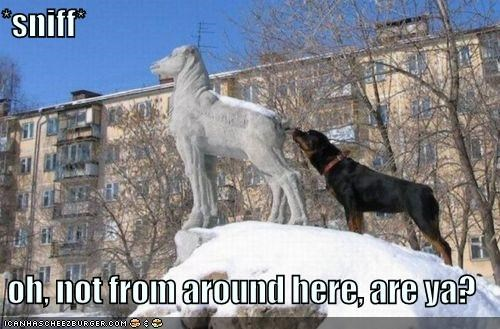 around,behavior,best of the week,from,Hall of Fame,here,information,not,odor,question,rottweiler,sniffing,statue