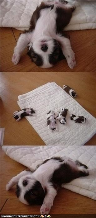 back blanket cyoot puppeh ob teh day escape nap puppy sleepy
