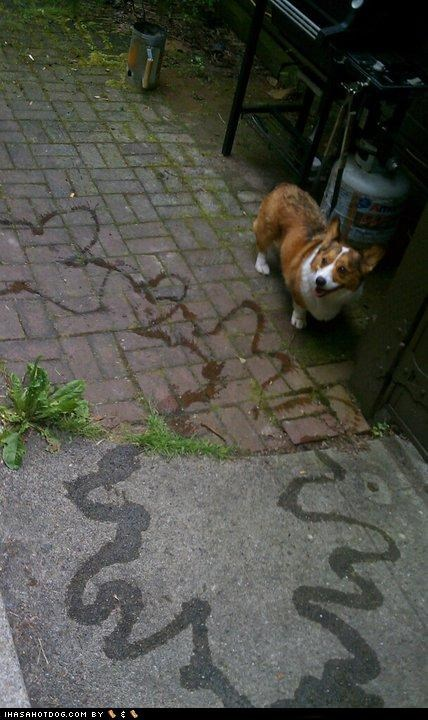 art corgi drawing patio pee proud smile