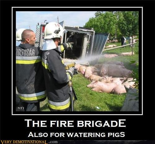 fire brigade,fireman,pig,Pure Awesome,watering,wtf