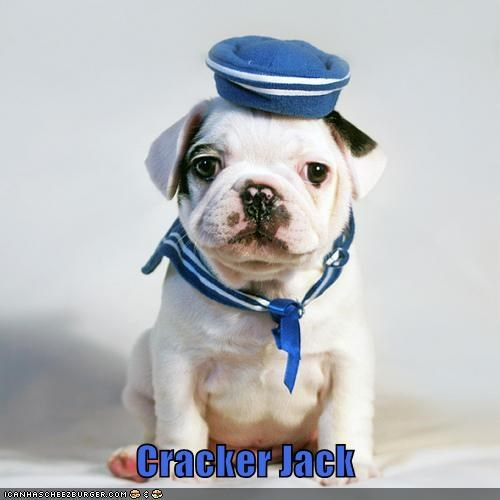 bulldog,costume,cracker,cracker jack,dressed up,jack,puppy,sailor