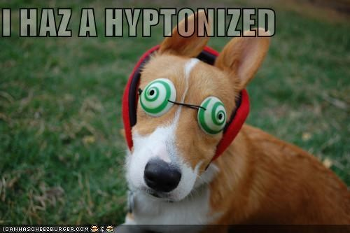 best of the week corgi glasses goggles Hall of Fame hypnotized i has lolwut