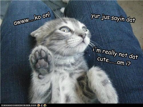 caption captioned cat flattered flattery flirting go on happy modesty - 4847330816