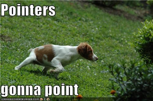 gonna haters gonna hate meme memedogs mixed breed point pointer - 4847364096