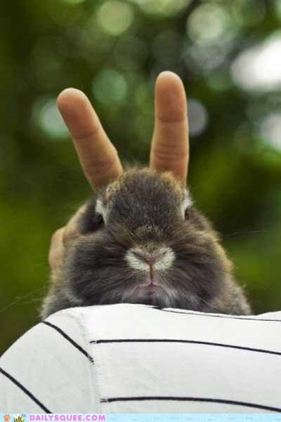 acting like animals awkward turtle bunny bunny ears clever Hall of Fame not amused rabbit suggestion - 4847507200