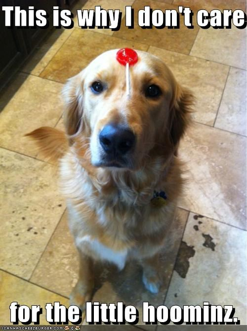 annoyed best of the week care dont golden retriever Hall of Fame human little lollipop reason stuck this unpleasant why - 4847539712