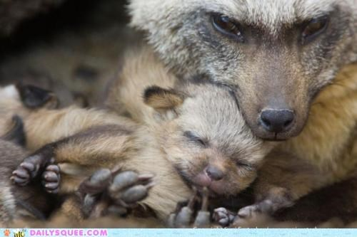 adorable baby cuddling fox foxes Hall of Fame kit mama Meltdown mother sleeping squee meltdown tiny
