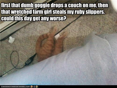 caption captioned cat couch crushed dropped plot ruby slippers stolen tabby version wicked - 4847871744