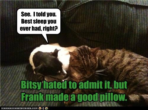 admitting,cat,dogs,good,jack russell terrier,making,Pillow,purpose,sleeping