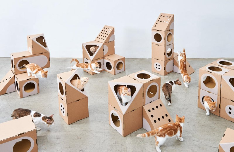 house modular design recycling Cats cardboard - 4848133
