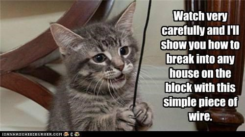 break break in caption captioned Carefully cat house how How To kitten piece show simple watch wire